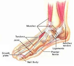 Tunnel tarsien for Douleur interieur du pied